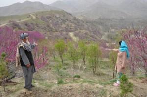 AsmaEschen.gardener.IstalifAfghanistan.withBRGApricotTrees-bySian.3-2010