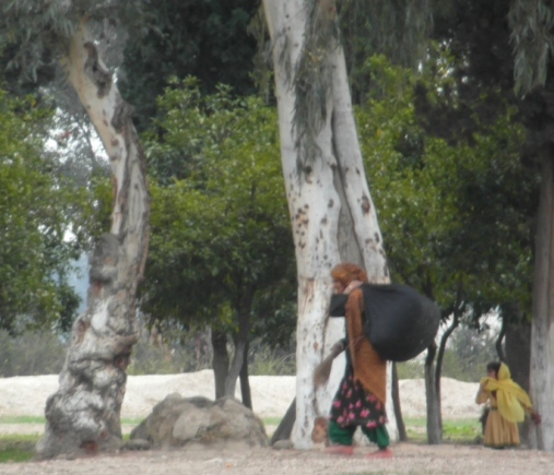 Children collecting leaves to make fuel briquettes for burning, Nengarhar province